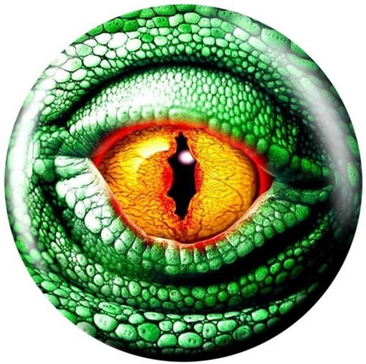 Brunswick Lizard Eye